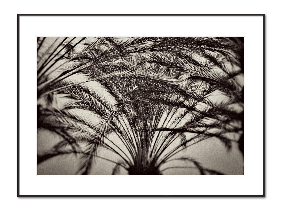 palmtree-artphoto-print-forsale